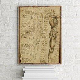 Leonardo da Vinci'nin Bacak kasları deseni