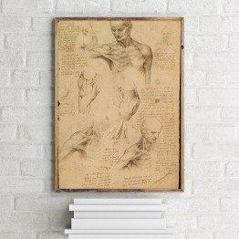 Leonardo da Vinci'nin yüzeysel omuz ve boyun anatomisi deseni