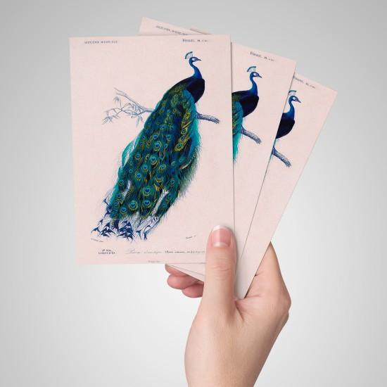 Tavuskuşu - Kartpostal
